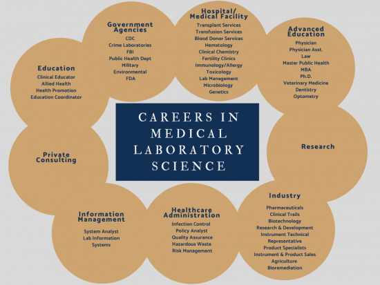 Those with a medical laboratory science degree work in government agencies, hospital/medical facilities, industry, research, healthcare administration, information management, private consulting,  and education. Some careers include transplant services, transfusion services, blood donor services, hematology, clinical chemistry, fertility clinics, immunology/allergy, toxicology, lab management, microbiology, genetics, research, clinical education, health promotion, allied health, private consulting, information management, health administration, and product specialists